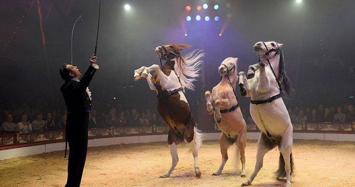 Milano, arriva lo stop agli animali nel Circo