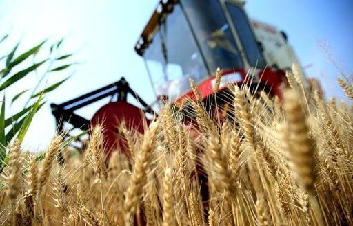 Il prezzo del grano vola e sorpassa quello del petrolio