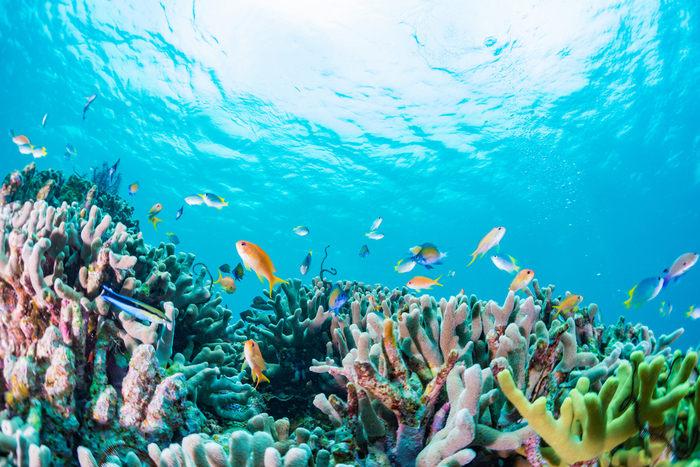 Effetto Covid: rinasce la Barriera Corallina