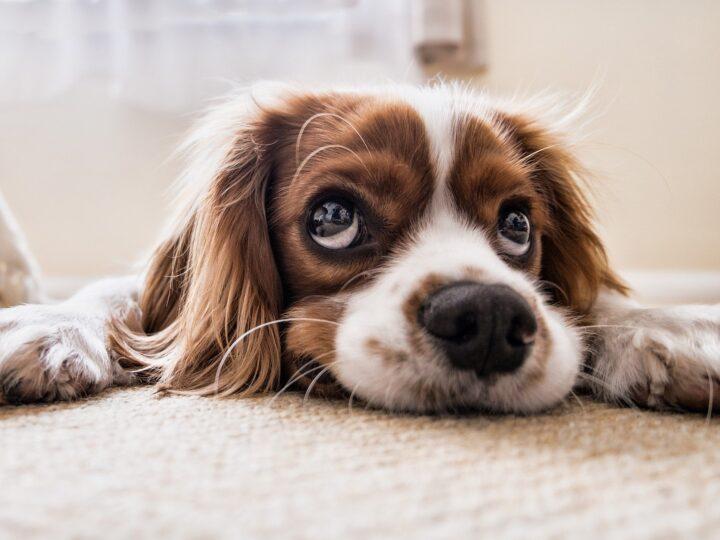 20 Idee di Nomi per Cani con Spiegazione